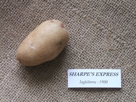 Sharpes Express